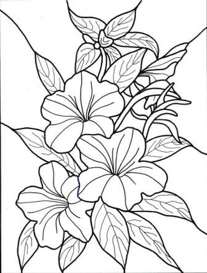hawaiian flower colouring pages (page 2  hawaiian flowers