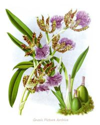 Vintage Botanical Print Purple Orchid No.12 Wall Art ...