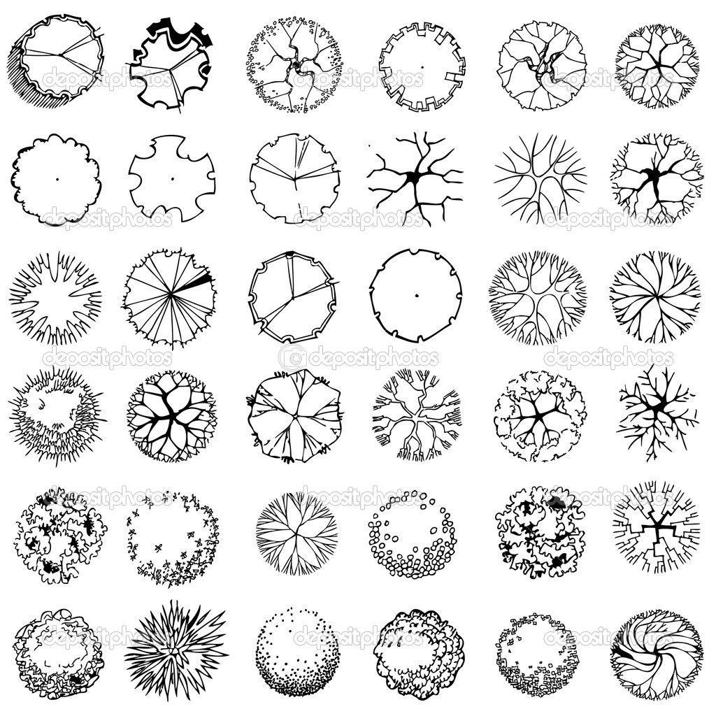shrub graphic symbols diagram 1996 honda accord engine palm tree plan google search graphics