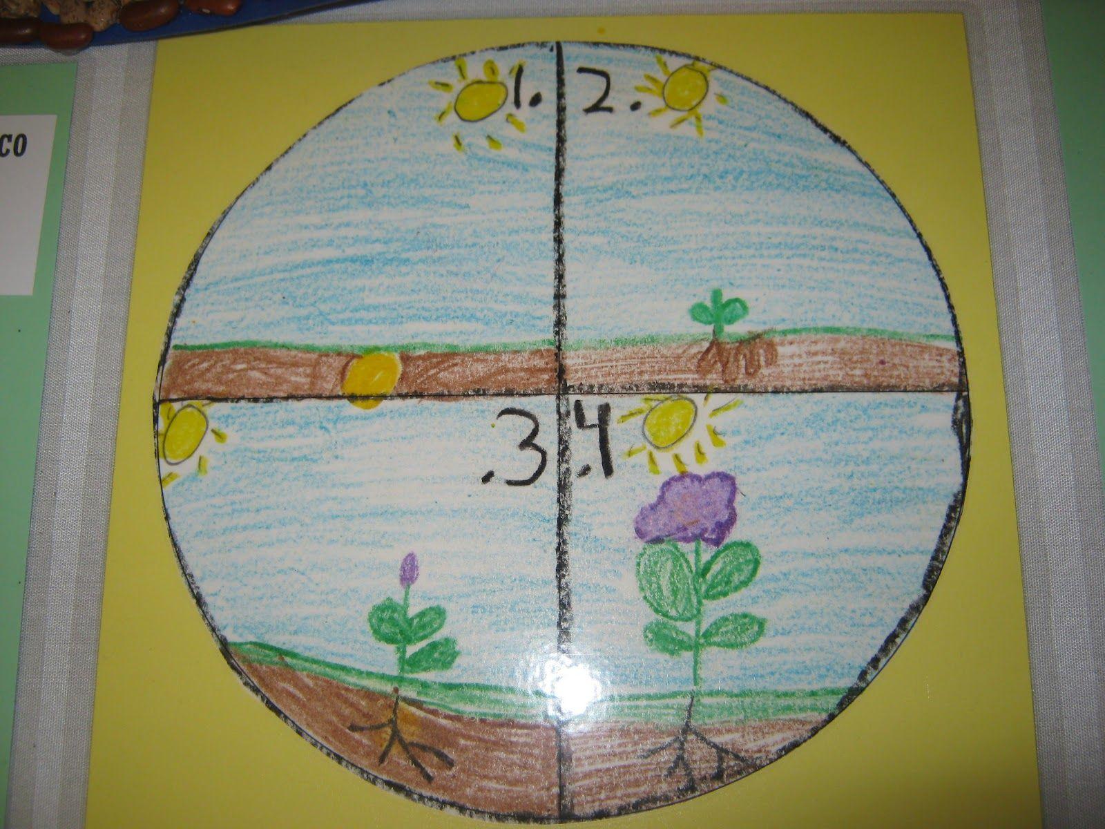Kindergarten Plant Lesson