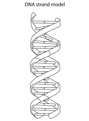 DNA Strand Model coloring page from Biology category
