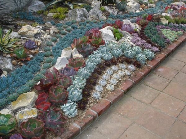 Succulent Landscaping Ideas 35 Indoor And Outdoor Succulent