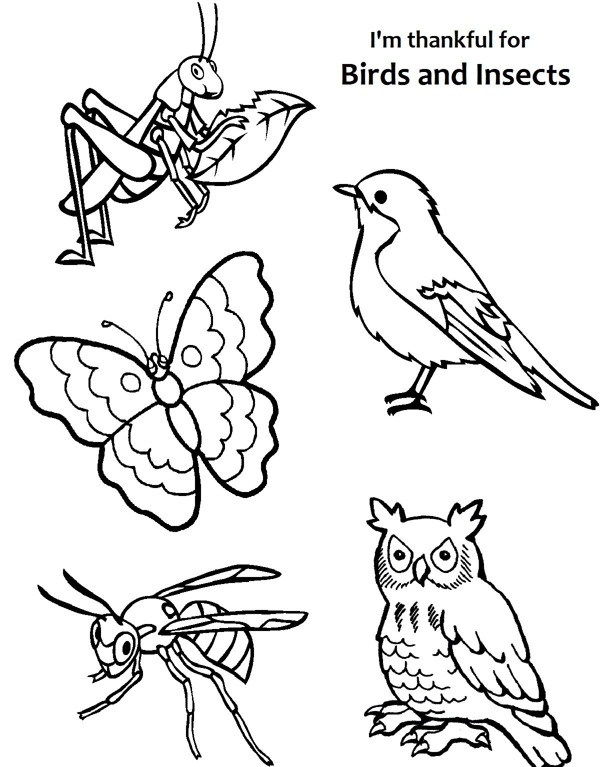I Am Thankful For Birds And Insects Coloring Page