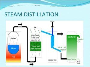essential oil steam distillation equipment  Google Search