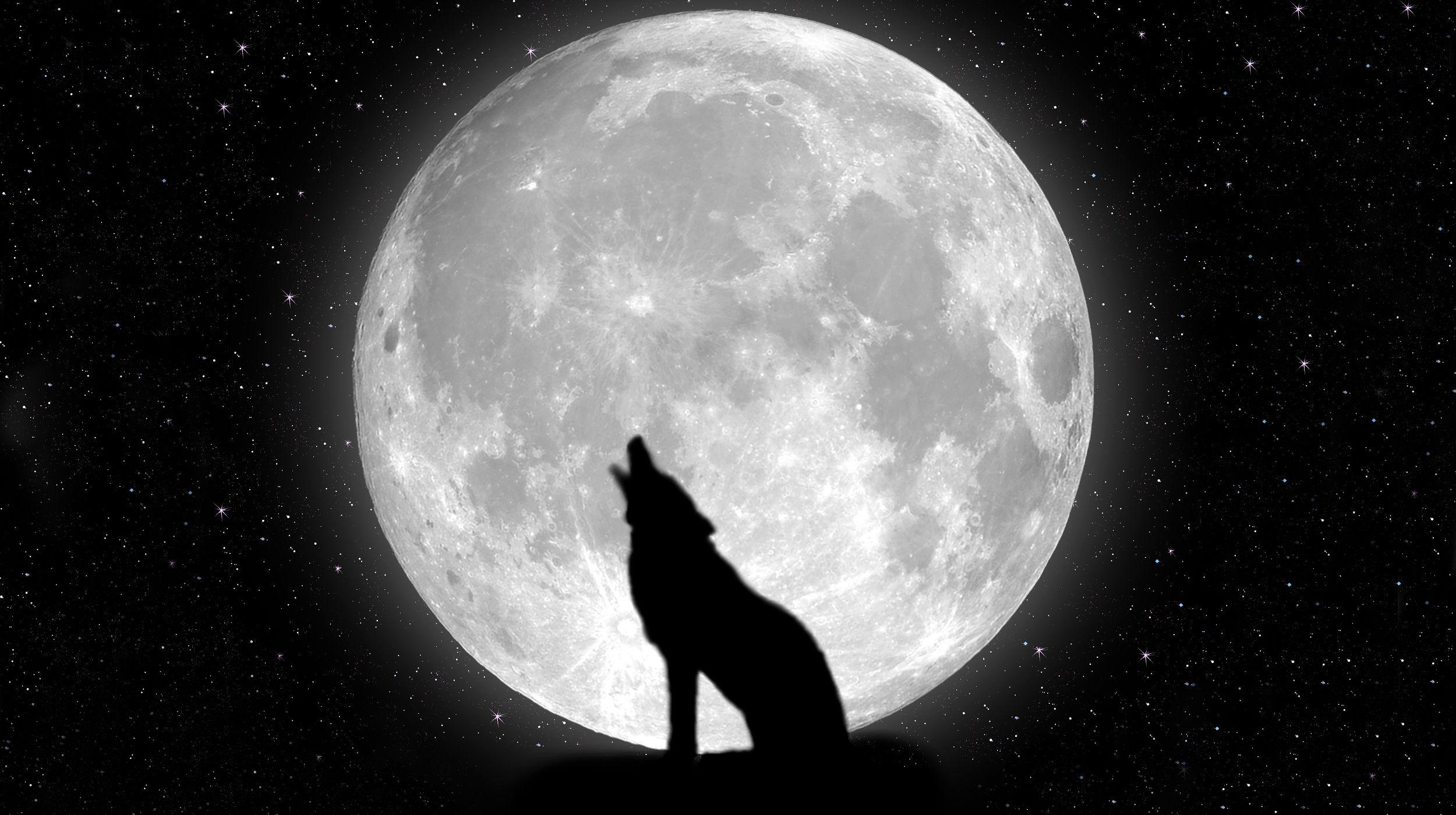moon night stars wolf hd wallpaper | download wallpaper