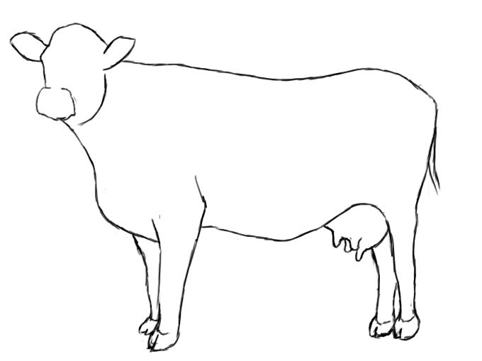 Easy To Draw Cow Pictures To Pin