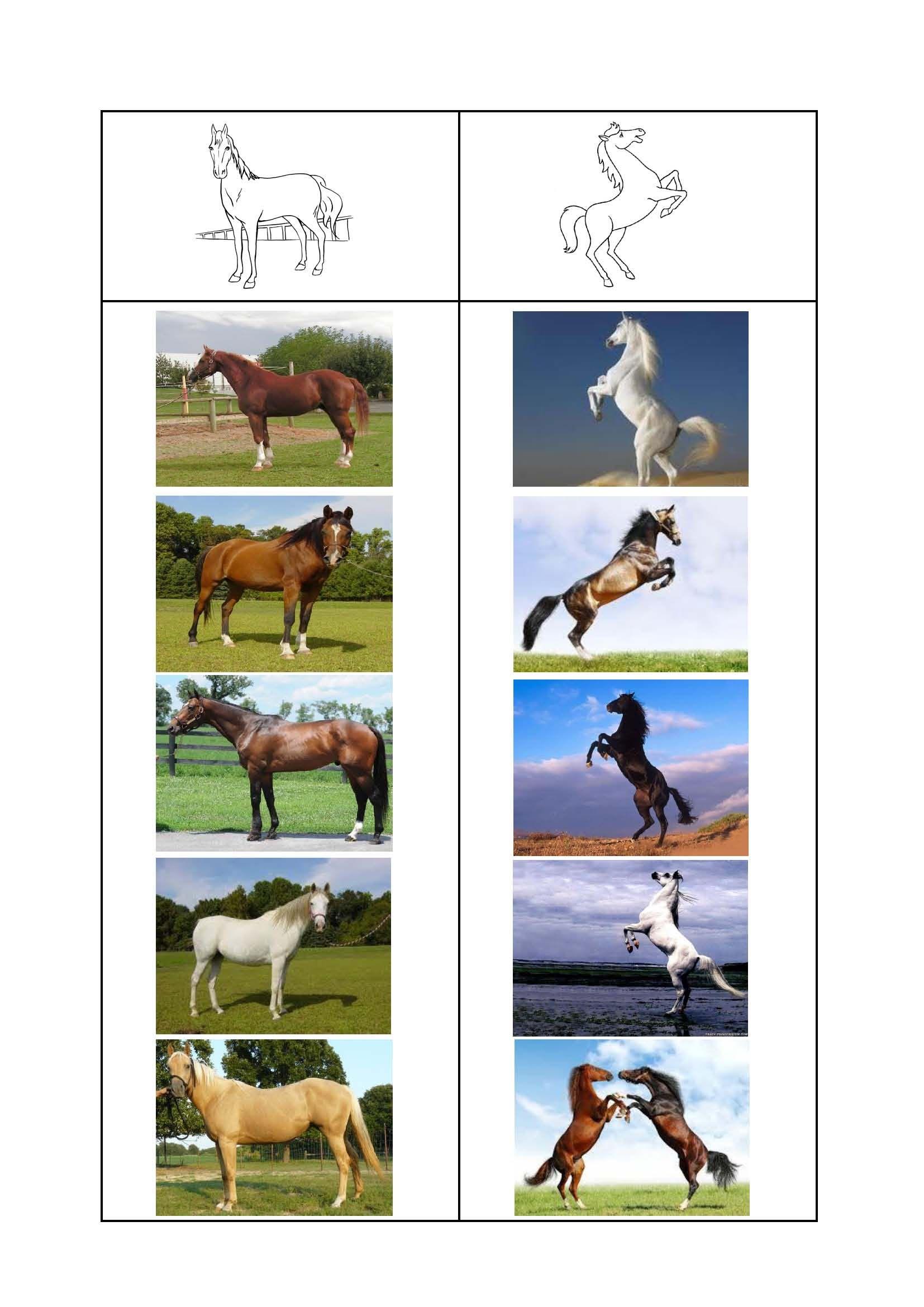 Hang Het Kaartje Juist Staat Het Paard Of Steigert Het Paard