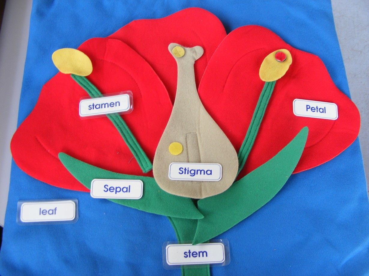 We Discuss The Different Parts Of A Flower And What Each