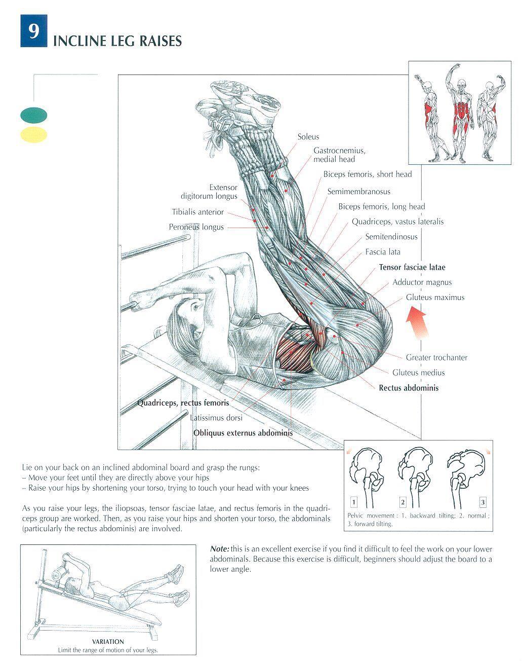 pull up muscles worked diagram 1999 ford f350 radio wiring the anatomy of stiff leg deadlift raises raising