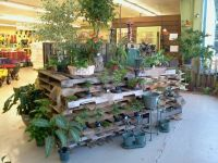View source image | Retail Spaces | Pinterest | Garden ...