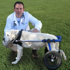 Wheelchair Dog Cane Dining Table And Chairs India Walkin Wheels We Have Several Of These A