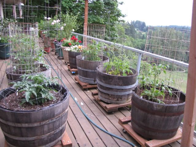 Container Vegetable Tips You Need To Try Gardens Container