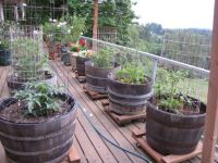 Grow a Vegetable Container Garden | Container gardening ...