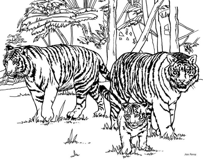 Intricate Cat Coloring Pages For S Tiger