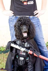 Darth Vader Dog Costume | Poodle, Halloween costume ...