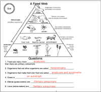 food chains and food webs worksheets for third grade ...