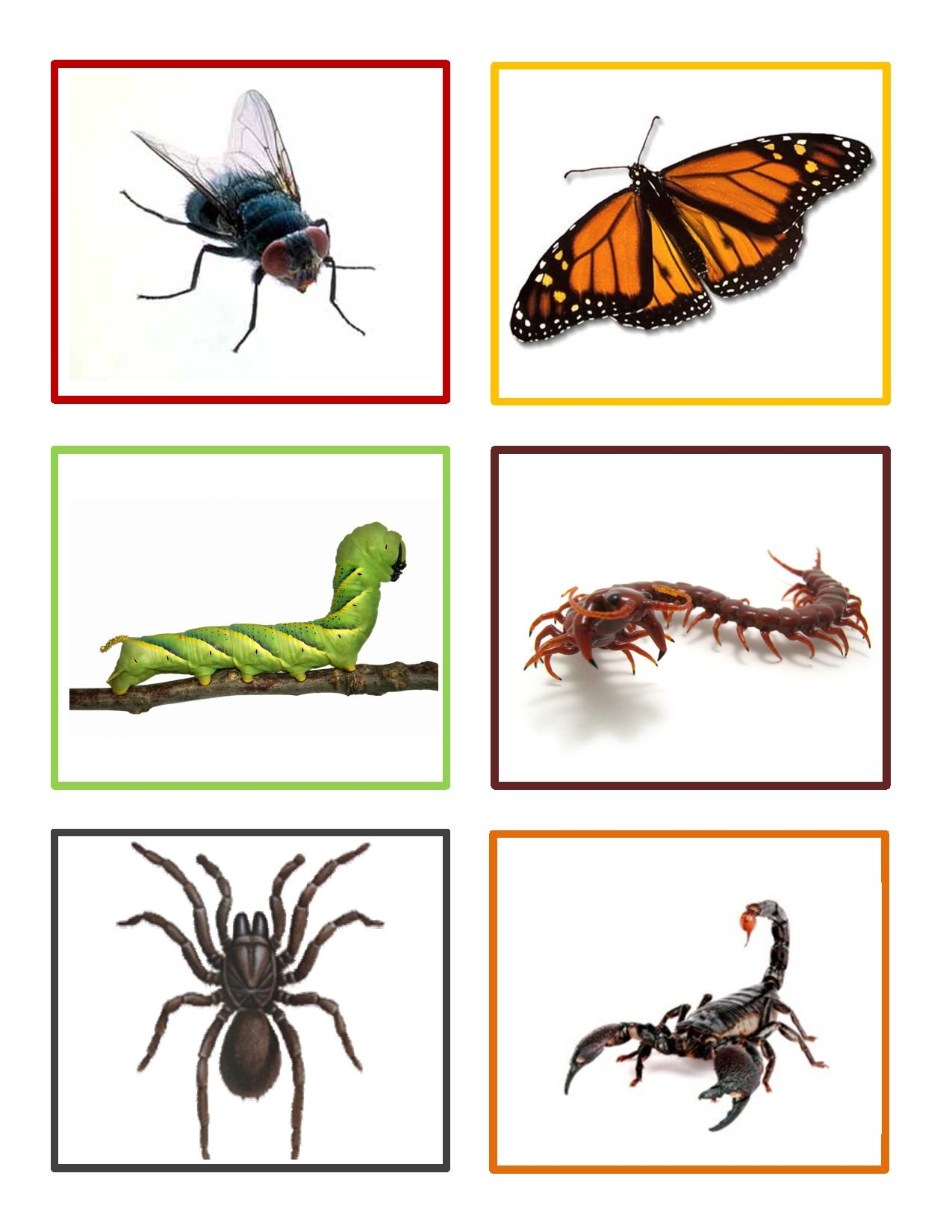 Insect Memory Game Is A Fun Activity For Preschoolers To Learn About Insects And Develop Memory