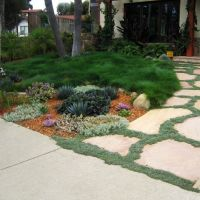 a lovely and turf-less front yard. I want my front yard to ...
