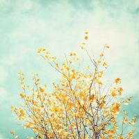 Modern Photography - turquoise mint green teal - mustard ...