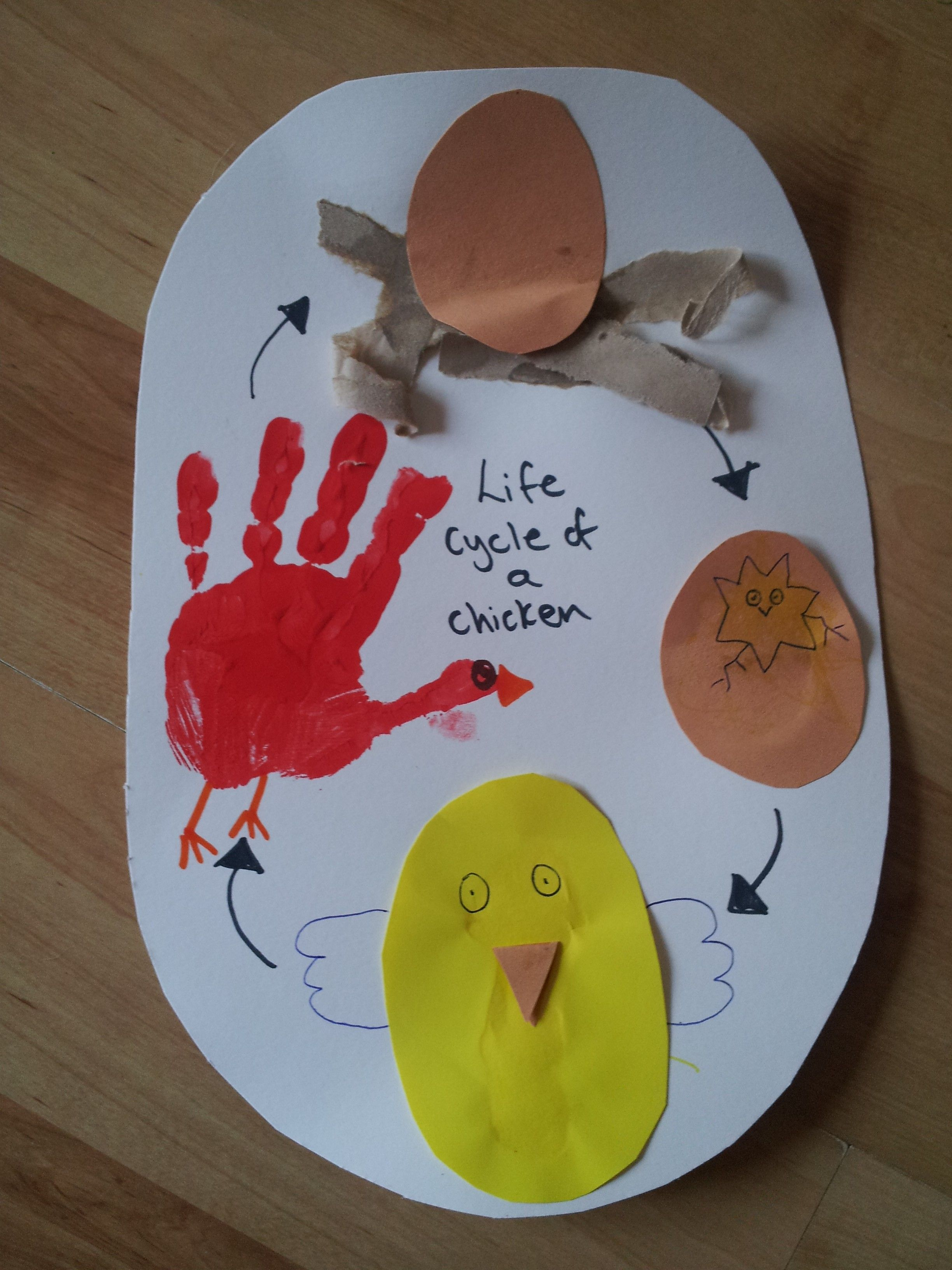 Life Cycle Of A Chicken Educational Fun Craft Idea