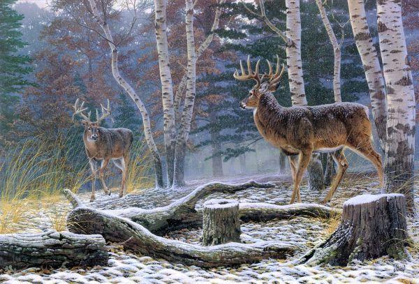 Winter Deer Desktop Backgrounds