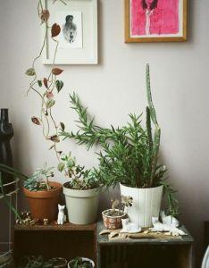 Fl  ra via leah reena bedroom also plantie shelves magic garden   pinterest rh