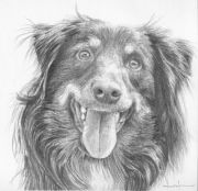 draw long hair dogs 10
