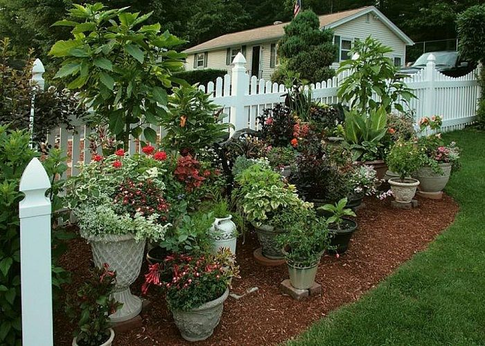 Container Gardens Ideas Container Garden Ideas Astounding