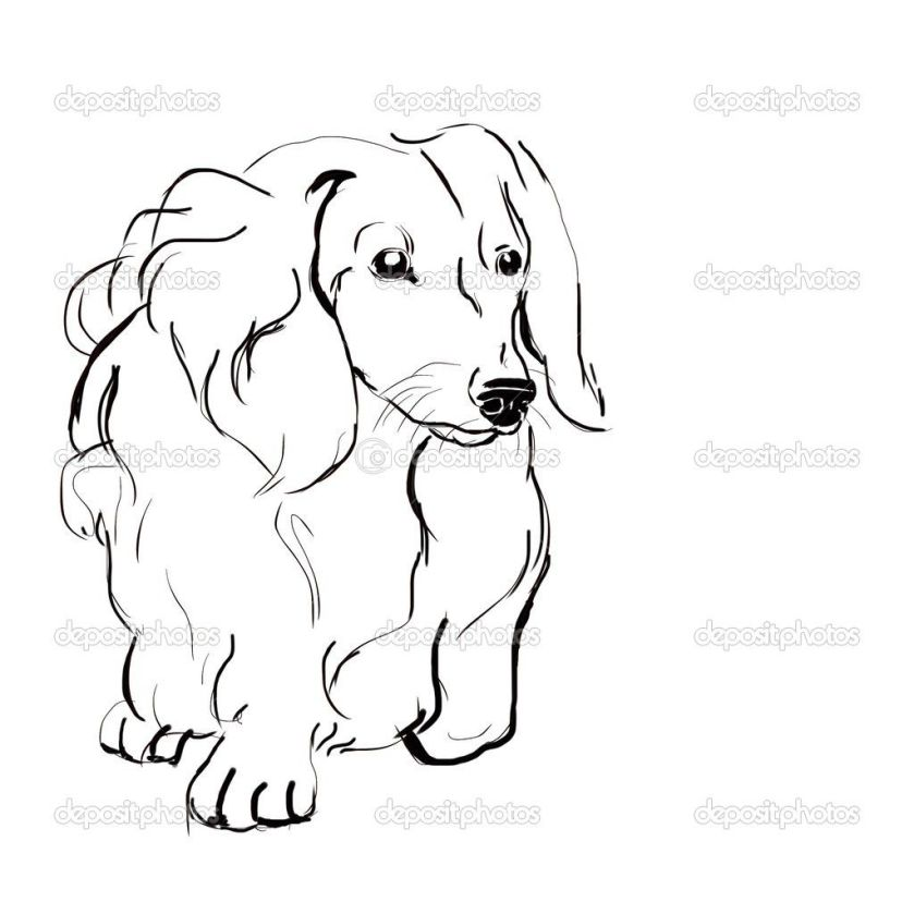 longhaired dachshund  drawing and painting  pinterest