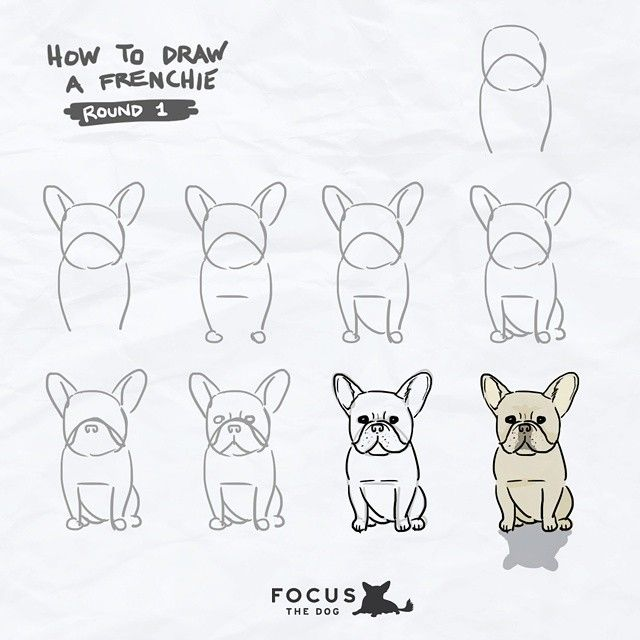 #focusthedogdraws : How to Draw… A Frenchie! (Tag yours! #