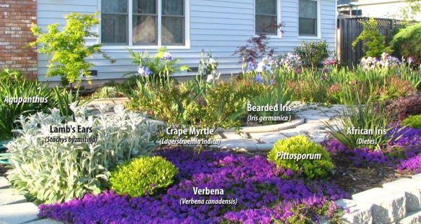 native plants drought
