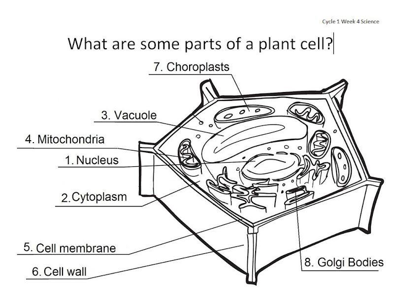 prokaryotic cell diagram unlabeled. Black Bedroom Furniture Sets. Home Design Ideas