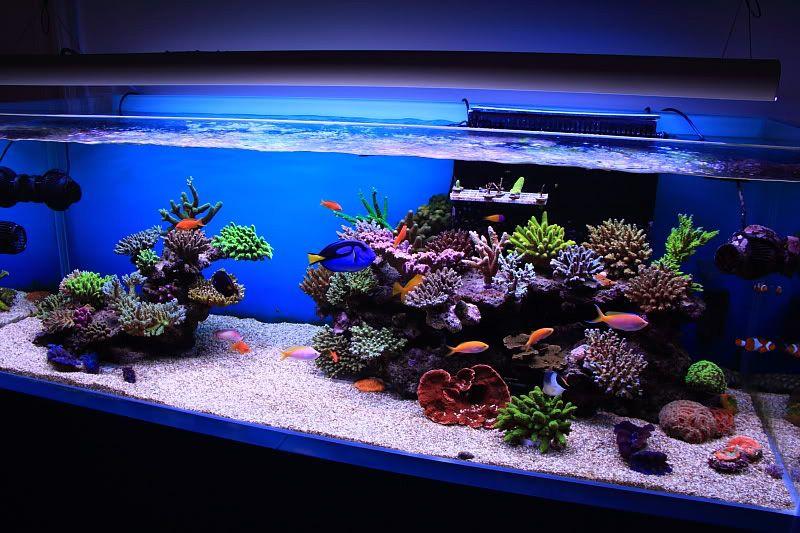 Reef Aquascaping On Pinterest  Reef Aquarium, Saltwater