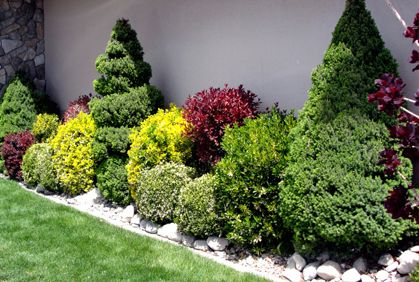 Landscaping With Shrubs And Bushes Photos And Design Ideas