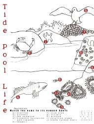 Tide pool coloring page with animal number matching