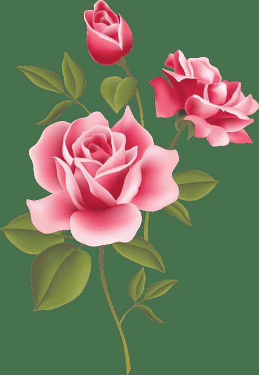 web design pink roses floral