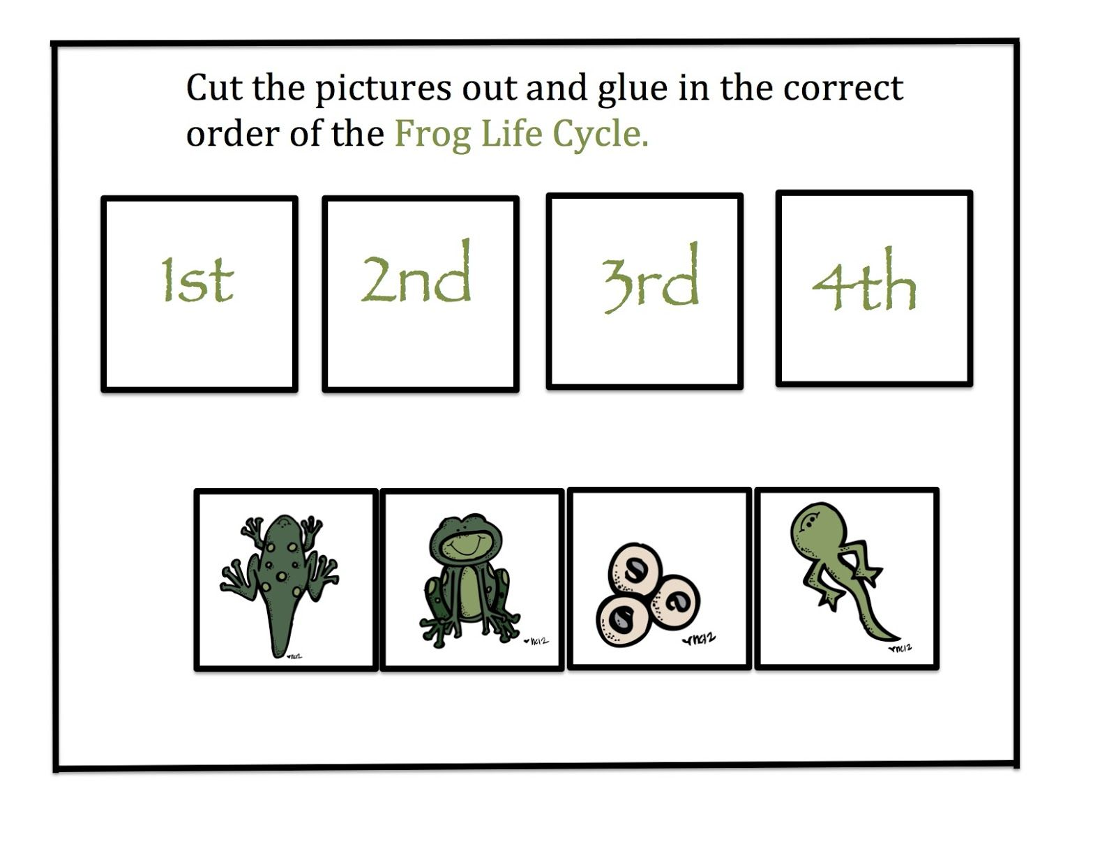 Preschool Printables Frog Life Cycle
