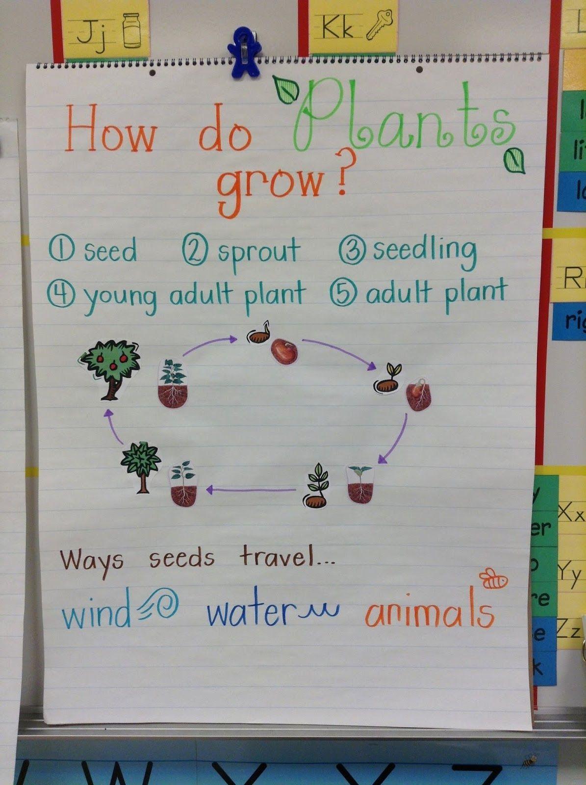 Plant Life Cycle Worksheet 3rd Grade
