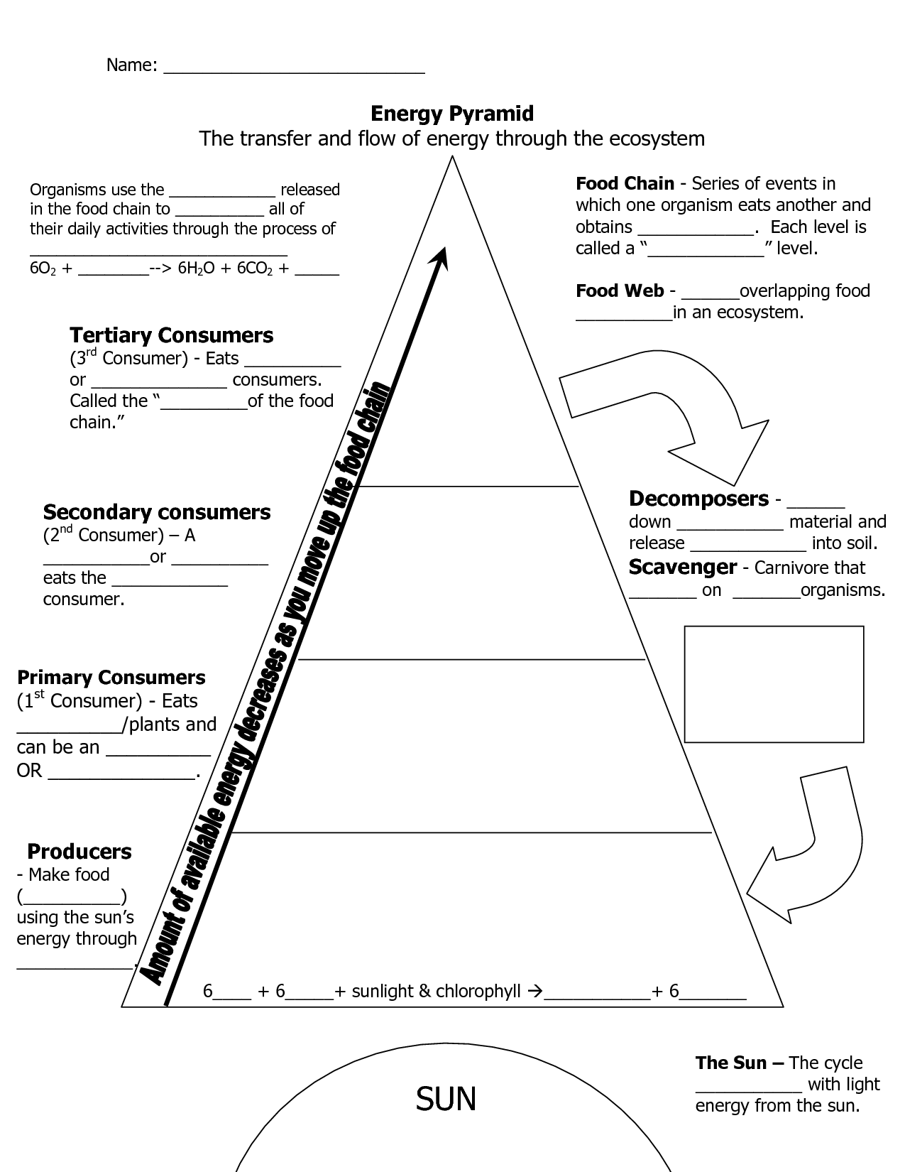Ecological Pyramid Worksheet Energy Pyramid Worksheets