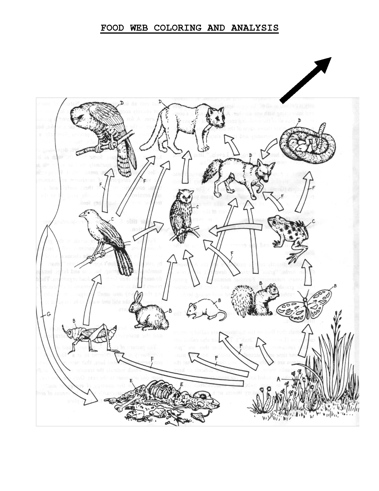 Food Web Coloring Sheet