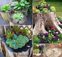 How to Create a Tree-Stump Planter Wondering what to do ...