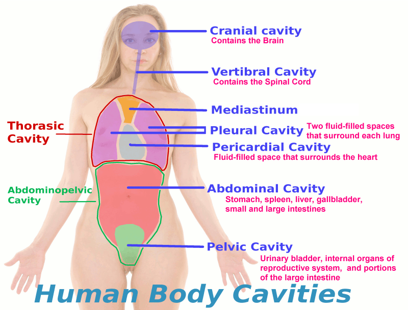 Body Cavities Are What