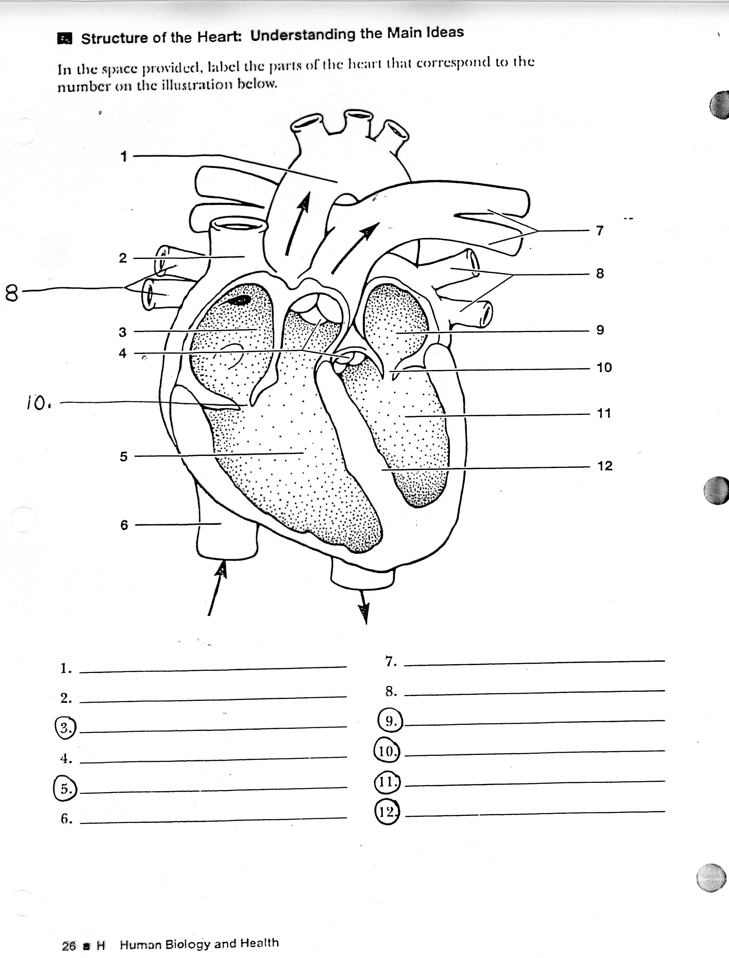 blank heart diagram labeled simple house wiring human learning me pinterest