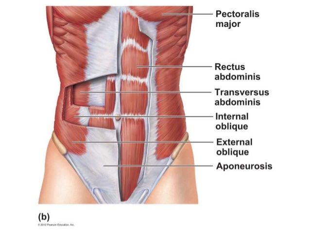 Back Pain Rib Cage Area