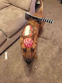 DIY zombie dog costume | Dog Costumes | Pinterest ...