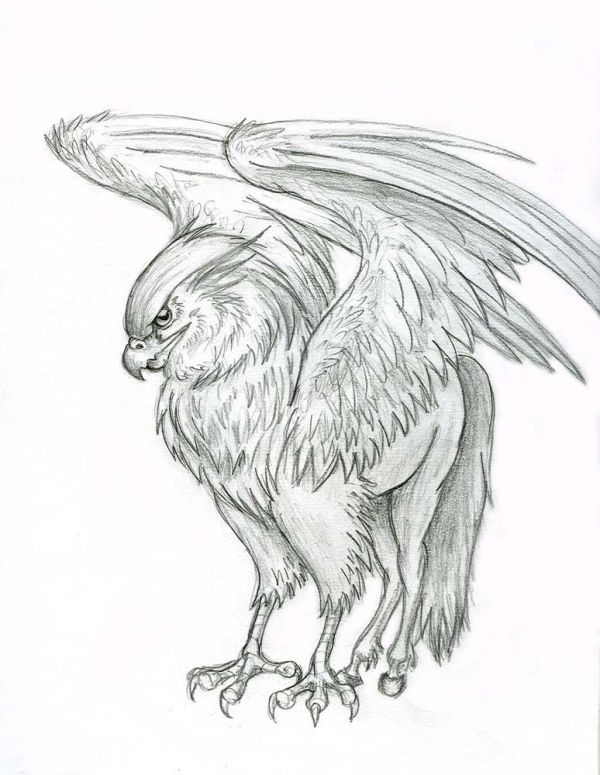 hippogriff Hippogriff by Lizzy23 on deviantART