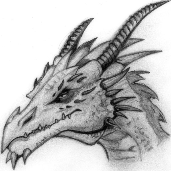 Pics Cool Dragon Head Drawings In Pencil Art
