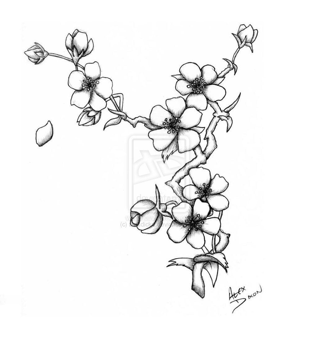 Hawaiian Flower Drawings