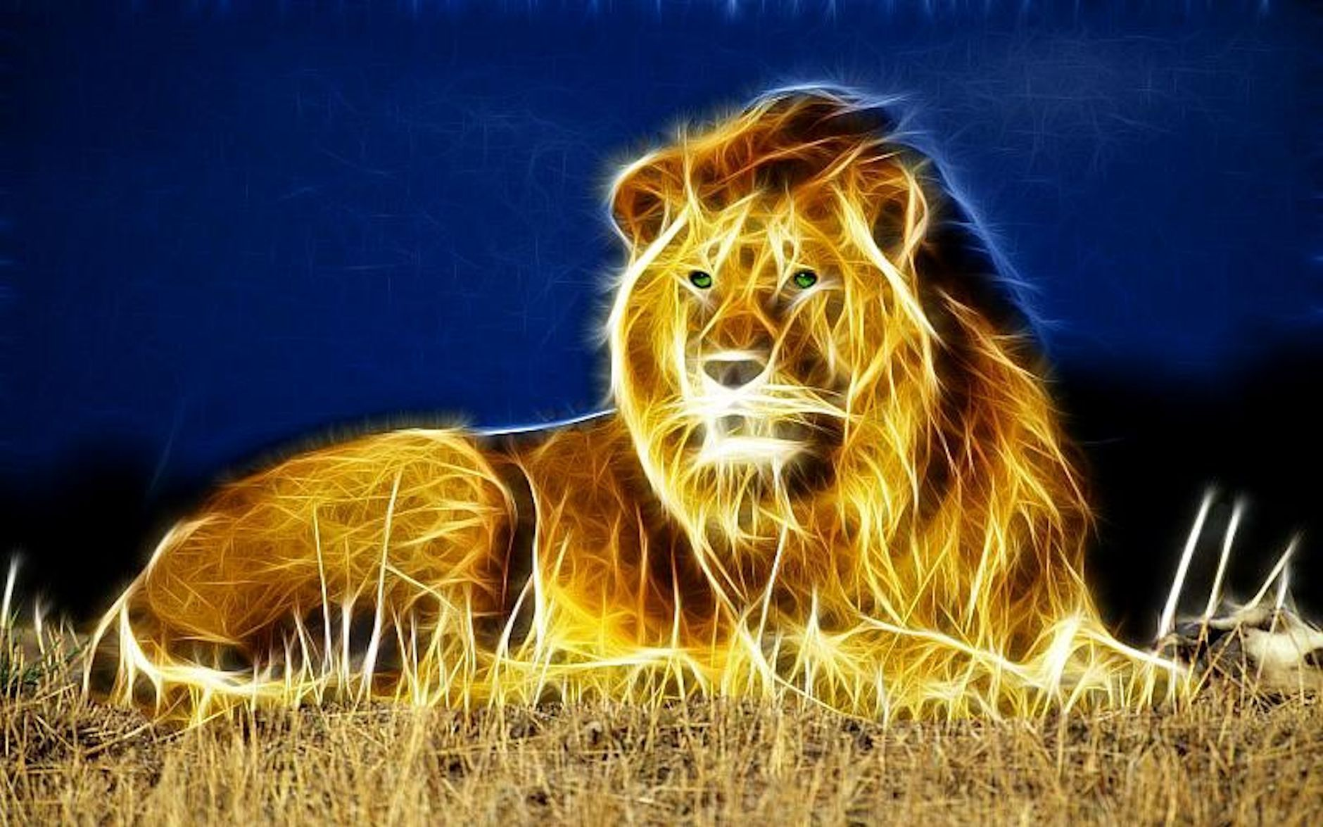 high definition lion wallpaper for free download   download