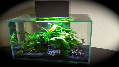 My Fluval Edge 6 gallon planted tank. Low tech with ...